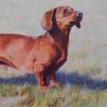 Rufus, 14 x 8 Oil on Linen